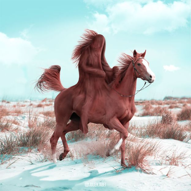 Horse-5bdb8edcb4780__700 Here's How I Imagine Animals Behave When You Aren't Looking (10+ Pics) Design Random
