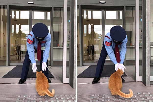 ewfwef-5bee77b336e0d__700 Two Cats In Japan Have Been Trying To Sneak Into A Museum For Years (30 Pics) Design Random