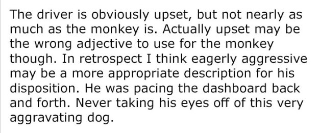 monkey-dog-fight-truck-driver-story-5-5be9341b13c0d__700 Guy Asks People To Share Unbelievable Things That Happened In Public And His Own Story Tops Everything Design Random