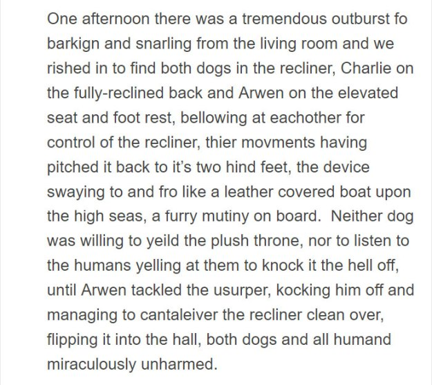 smart-dog-mischief-shenanigans-list-arwen-13-5bfe5862a2f27__700 Person Gets A Service Dog Trained In Prison, Discovers How Naughty She Is Design Random