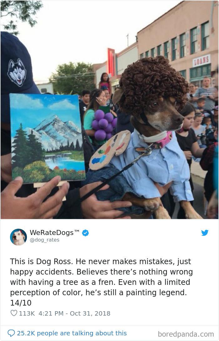 Valutiamo i cani
