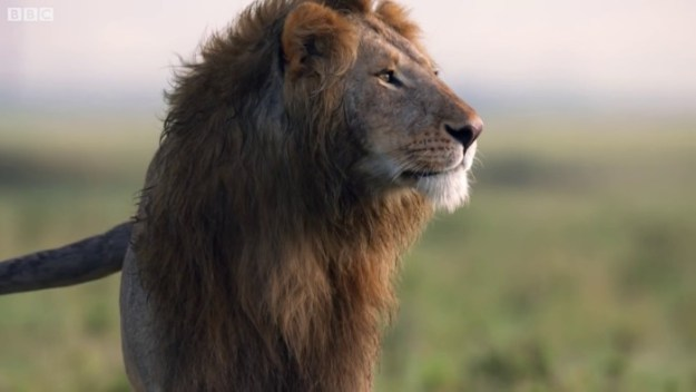 2-5c0a3283571ee__700 Lion Is Losing Fight Against 20 Hyenas, Bro Hears His Cries And Rushes To Save Him Design Random
