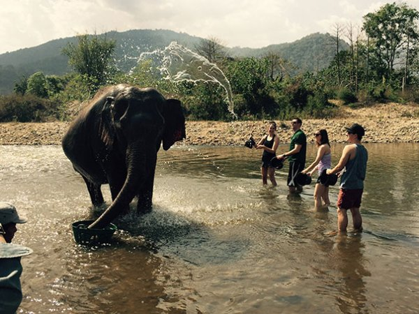 The Water Flying Onto This Elephant Looks Like An Elephant Too
