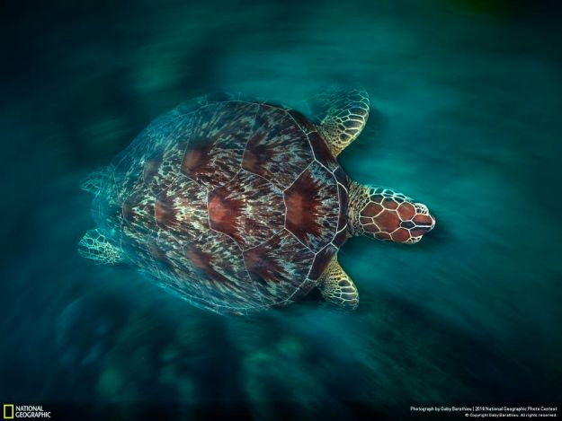 national-geographic-nature-photographer-of-the-year-2018-winner-126-5c0a368961e17__880 50 Of The Most Incredible Photos Of The National Geography Photo Contest Of 2018 Design Photography Random