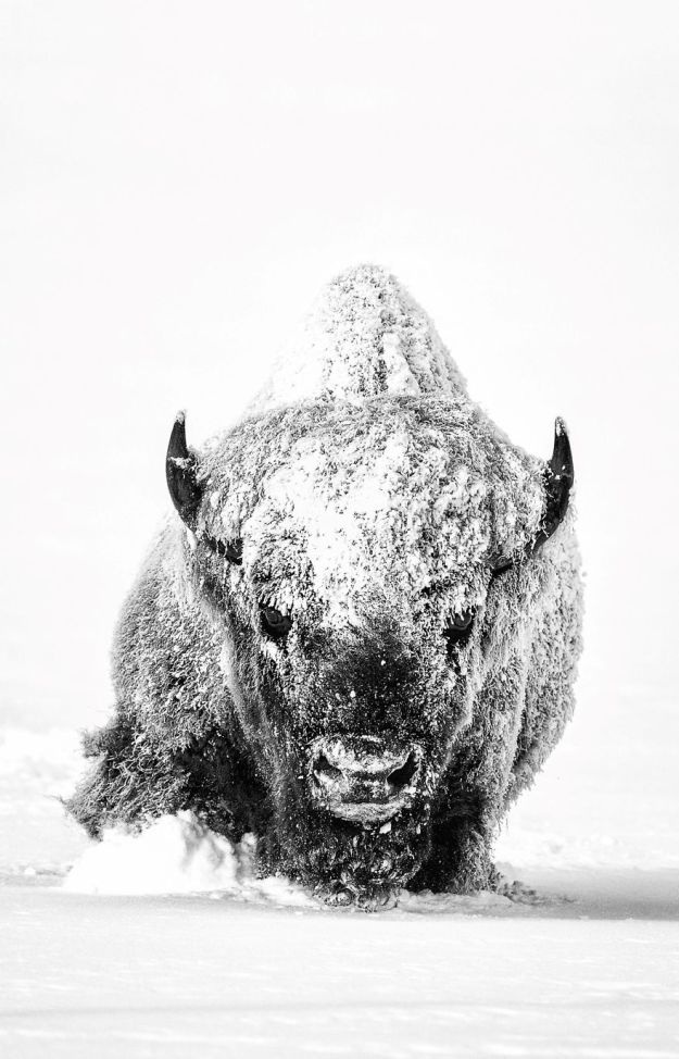 national-geographic-nature-photographer-of-the-year-2018-winner-31-5c0a35bda725f__880 50 Of The Most Incredible Photos Of The National Geography Photo Contest Of 2018 Design Photography Random