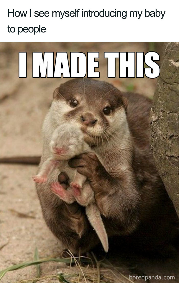 50 Of The Funniest Pregnancy Memes Ever Bored Panda