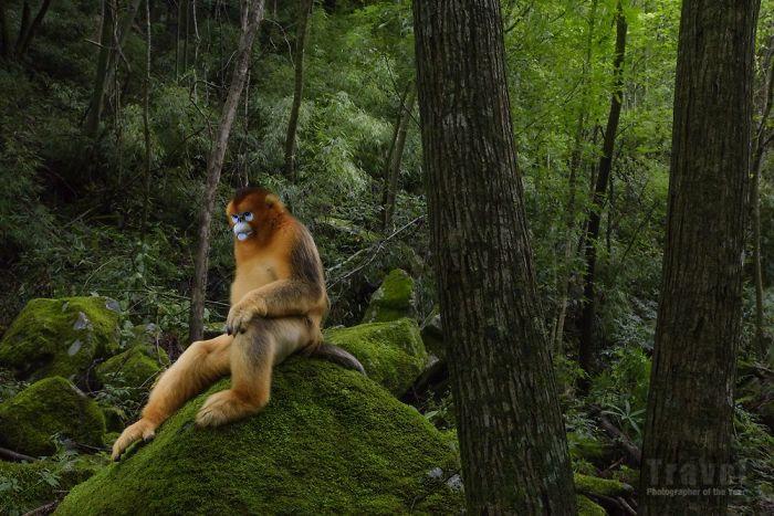 66 Amazing Photos That Won The 2018 Travel Photographer Of The Year Awards travel photo winners tpoty awards 2018 5c2091b0cb437  700
