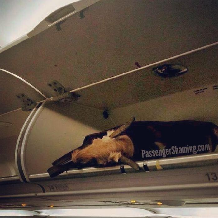 Ok, niños, ¿cuál de ustedes dejó su bolsa llena O&#39; Cabeza de animal muerto en el compartimento superior? [19659003] fuente </p data-recalc-dims=