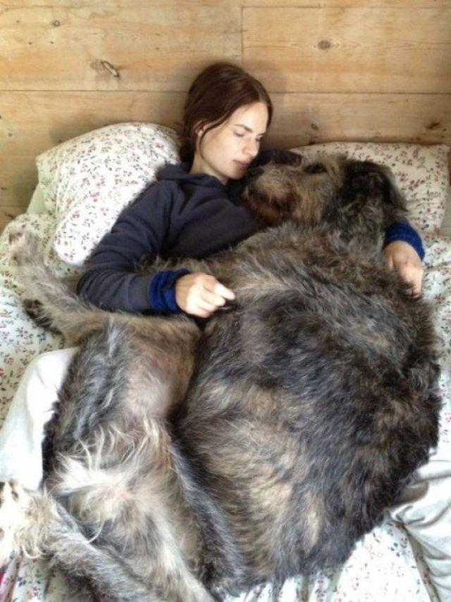 El perfecto compañero de siestas