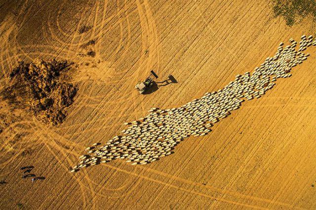 Rebaño de ovejas, por Photographersworld
