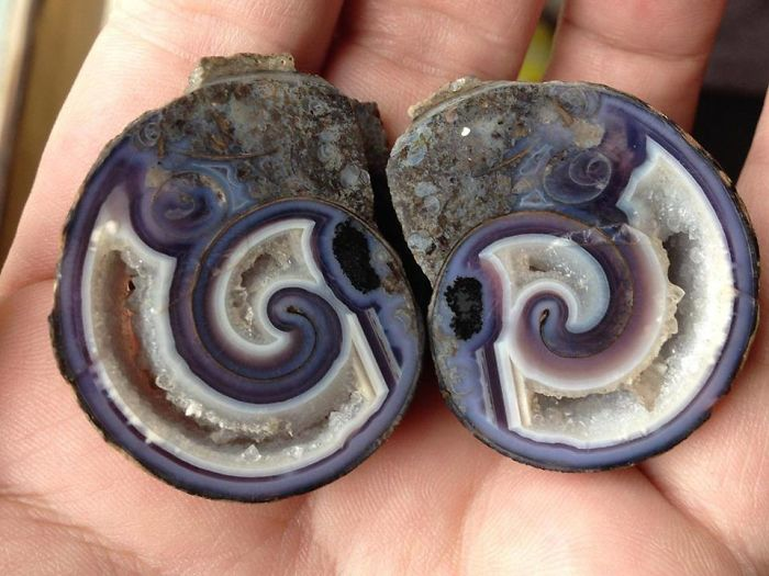 An Agate Shell. Minerals Have Grown In The Voids Of The Shell And Eventually Replaced The Shell Too