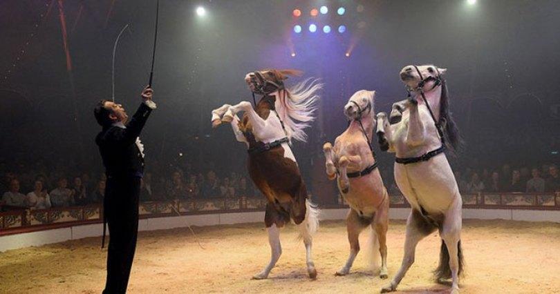 animal holograms circus roncalli germany 13 - Circo alemão usa hologramas em vez de animais vivos