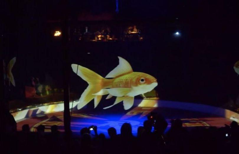 animal holograms circus roncalli germany 6 5cf652c0d94ba  700 - Circo alemão usa hologramas em vez de animais vivos