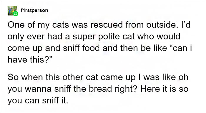 Tumblr User Explain Why Cats Are Obsessed With Eating Bread 10