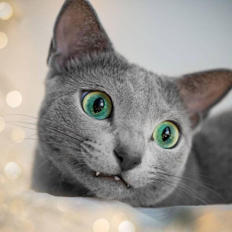 46720836 614371568992408 6202344936238612801 n 5d379b47a4b72  880 - Olhar felino: Gatos lindos têm olhos hipnotizantes