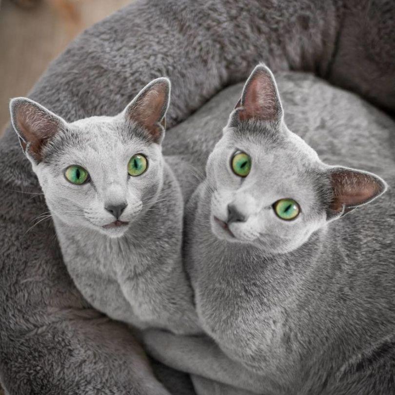 47586483 1971590813136242 8676765261322204095 n 5d379b5b9fba9  880 - Olhar felino: Gatos lindos têm olhos hipnotizantes