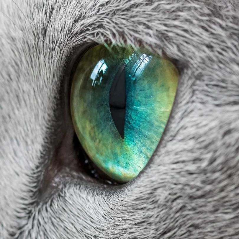 BnEZkWRHqh6 png  880 - Olhar felino: Gatos lindos têm olhos hipnotizantes