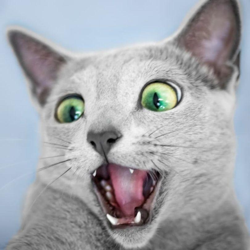 Bww6qpDATcg png  880 - Olhar felino: Gatos lindos têm olhos hipnotizantes