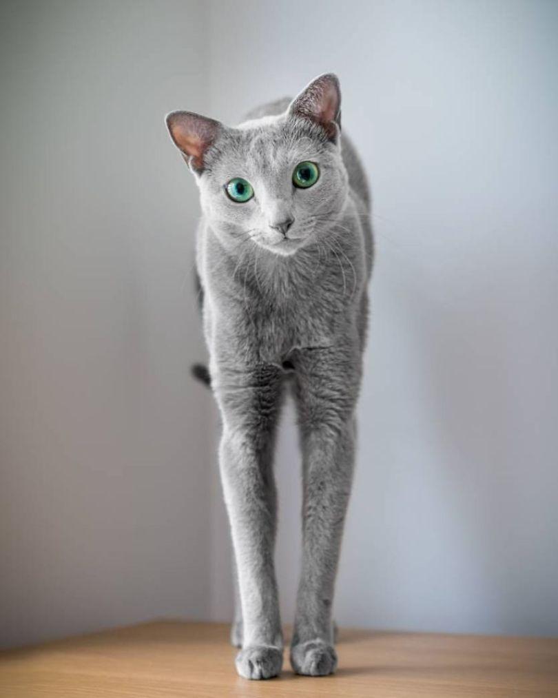 Bysio7UAzE6 png  880 - Olhar felino: Gatos lindos têm olhos hipnotizantes