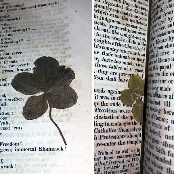 These 4 And 5 Leaf Clovers I Found In This Nearly 200-Year-Old Book