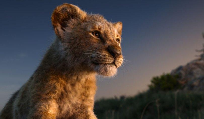 lion king live action baby simba bahati dallas zoo 13 - Conheça a Leoa de verdade que deu origem ao pequeno Simba