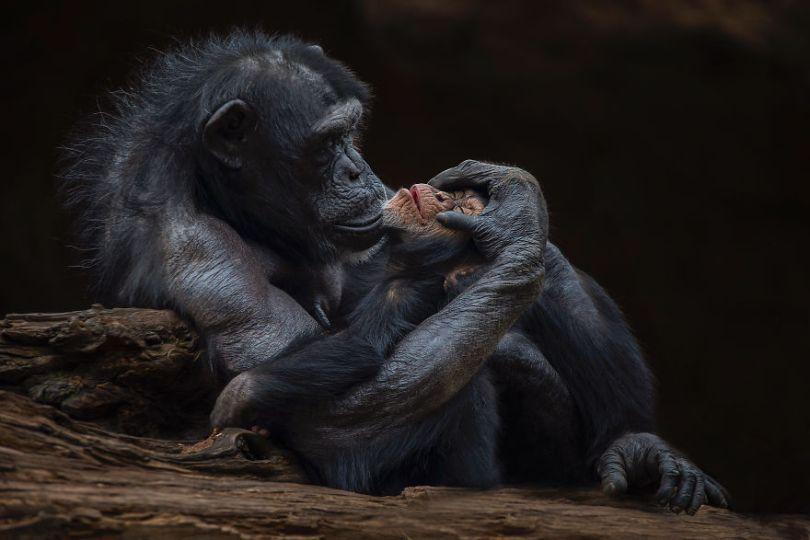 Motherly love by santiagolopezfotografia Spain Santiago LopezAGORA images 5d6fc66a80326  880 - As imagens mais inacreditavelmente incríveis de 2019