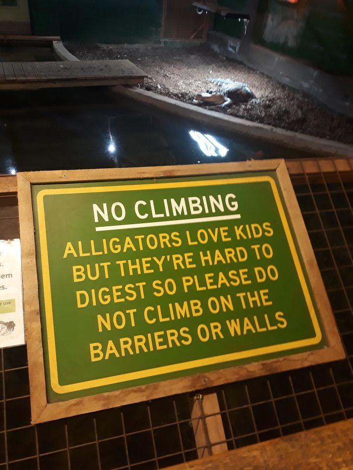 Alligators Love Kids