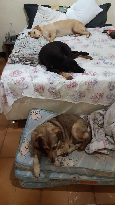 Brazilian priest welcomes stray dogs inside church to be adopted 5dafb8f70b638 jpeg  700 - O que fez o cachorro ao ver a porta da igreja aberta?