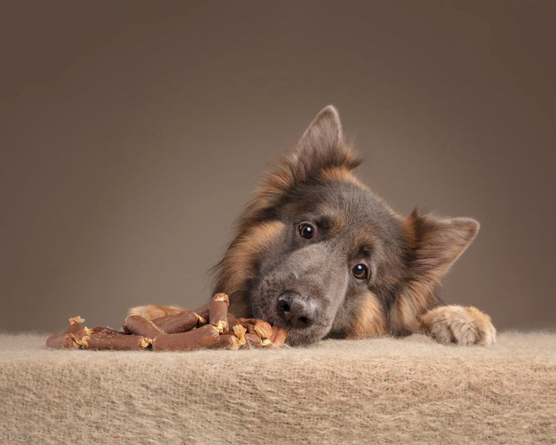 Rhiannon Buckle Pet Photography Dogs 03 5d9cf25b011ff  880 - Fotógrafo de animais de estimação