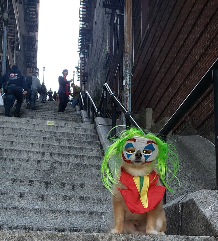 joker stairs tourist attraction new york 18 5daff6435525e  700 - Escadas do 'Coringa' em Nova York se tornam uma atração turística!