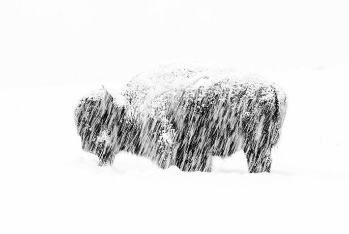"""""""Snow Exposure"""" By Max Waugh, USA, Black And White, Winner 2019"""