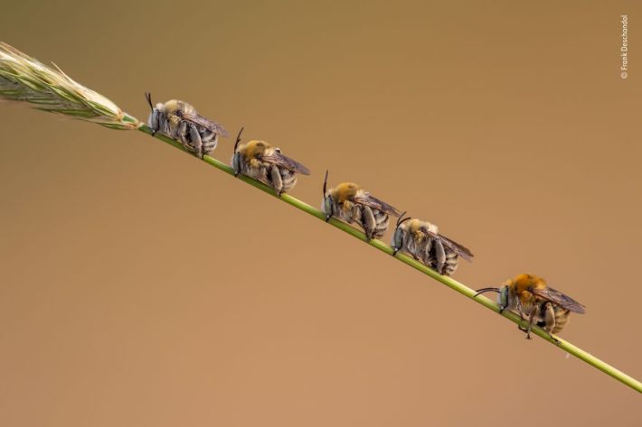 """Bee Line"" By Frank Deschandol, France, Behaviour: Invertebrates, Highly Commended 2019"