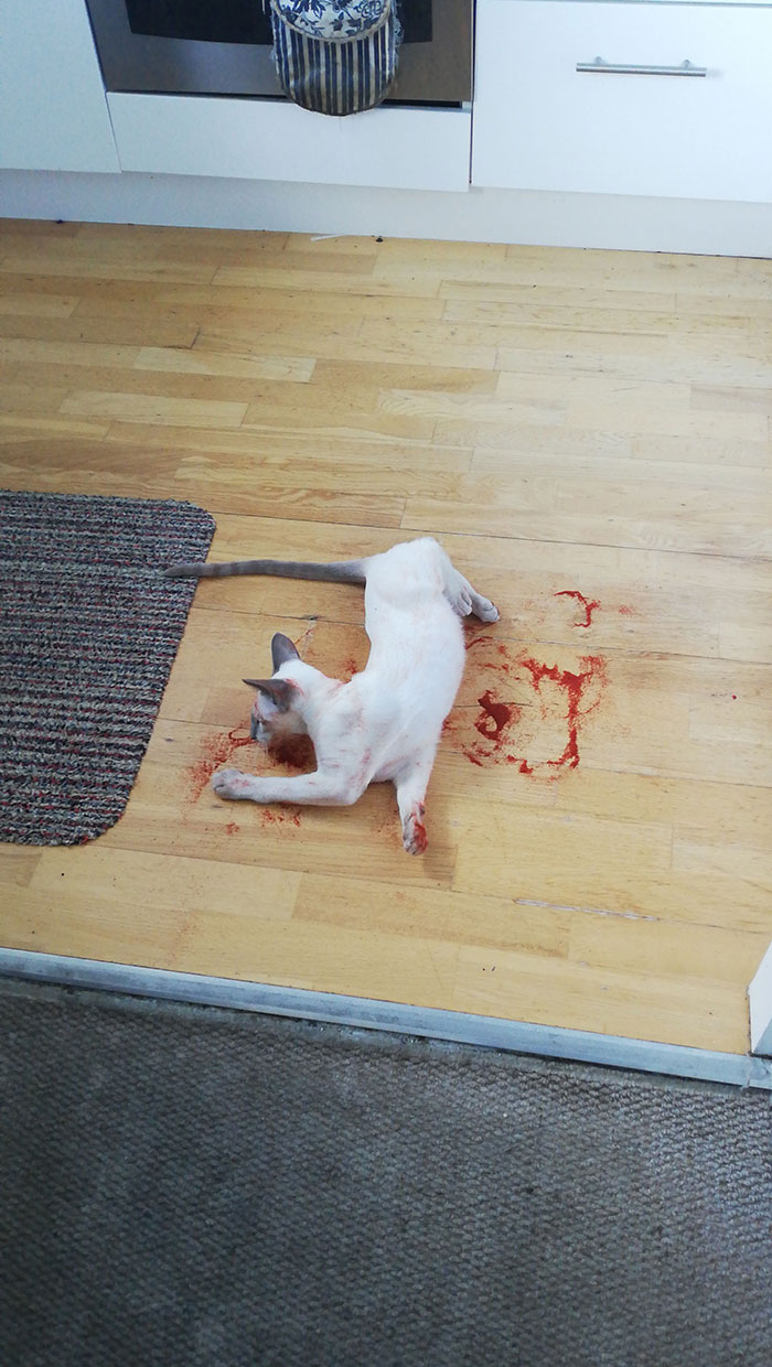 Cat Gave Me A Scare This Morning. It's Paprika