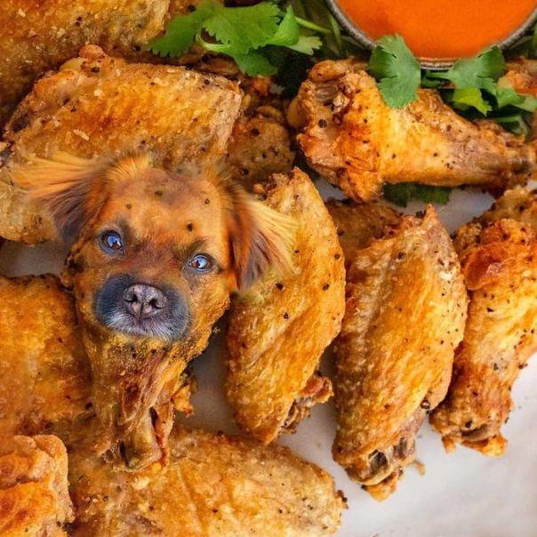 Otis The Chicken Wing