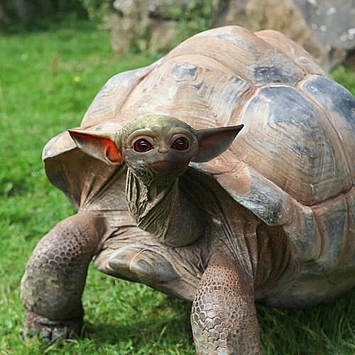 Is Baby Yoda An Animal? Or Is It The Turtle That's In Baby Yoda? Who Cares!