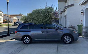 Dad Goes Christmas Tree Shopping Without Mom, Decides To Troll Her With Hilarious Pics