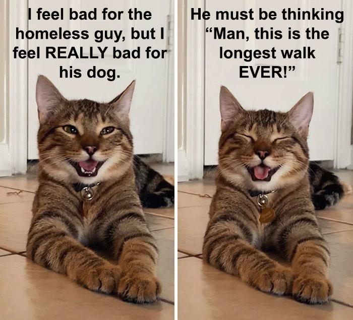 Introvert Cat Meme Truth Love Unity