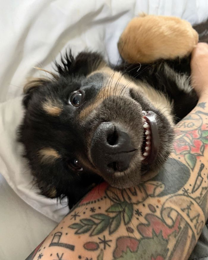 This Online Community Shares The Silliest Dog Photos Where Their Teeth Are Visible In A Funny Way (30 Pics) 17