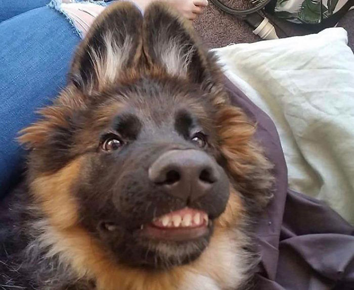 This Online Community Shares The Silliest Dog Photos Where Their Teeth Are Visible In A Funny Way (30 Pics) 8
