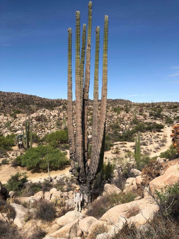 Did You Guys Know How Big Cactus Can Get? That's Me At The Bottom