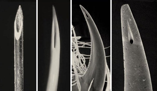 Comparison Of The Tip Of A Hypodermic Needle, A Viper's Fang, A Spider's Fang And The Stinger Of A Scorpion