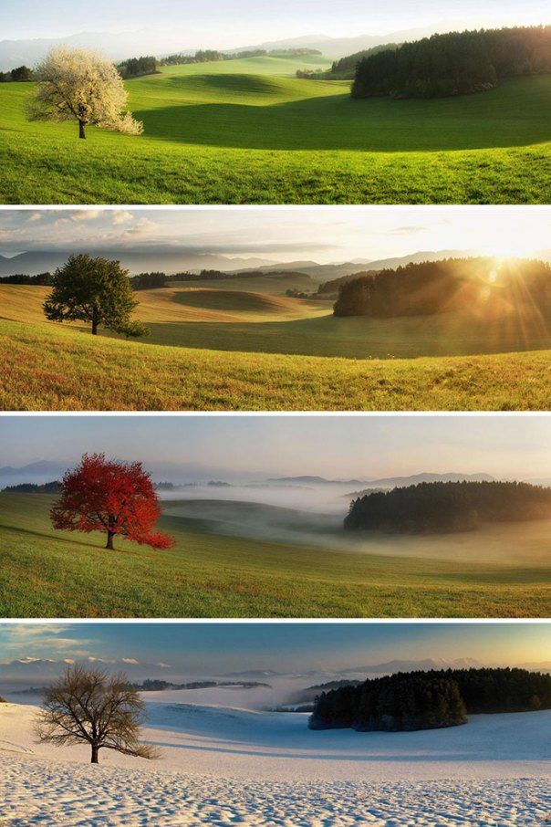 Same Tree, Different Seasons