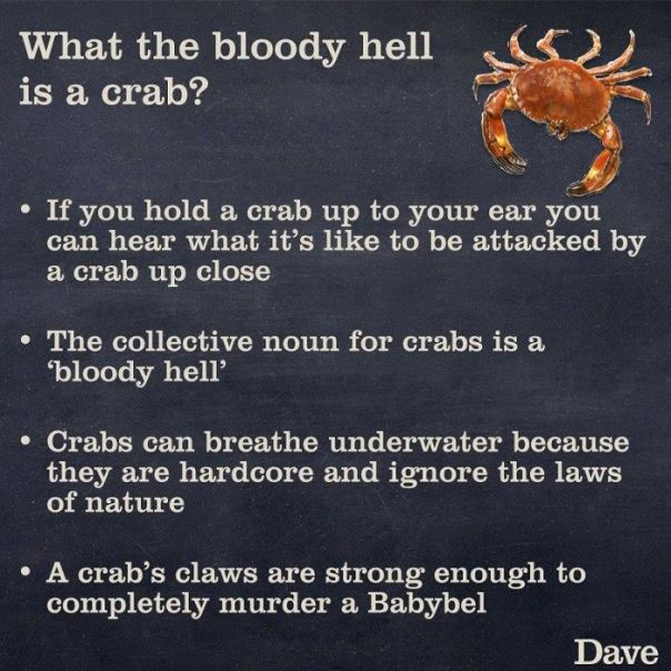 Guide-To-Animals-Daves