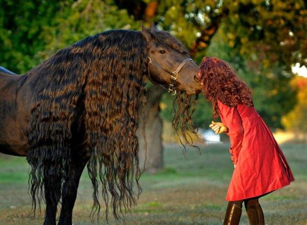 Frederik-The-Great-Friesian-Horse-Stallion