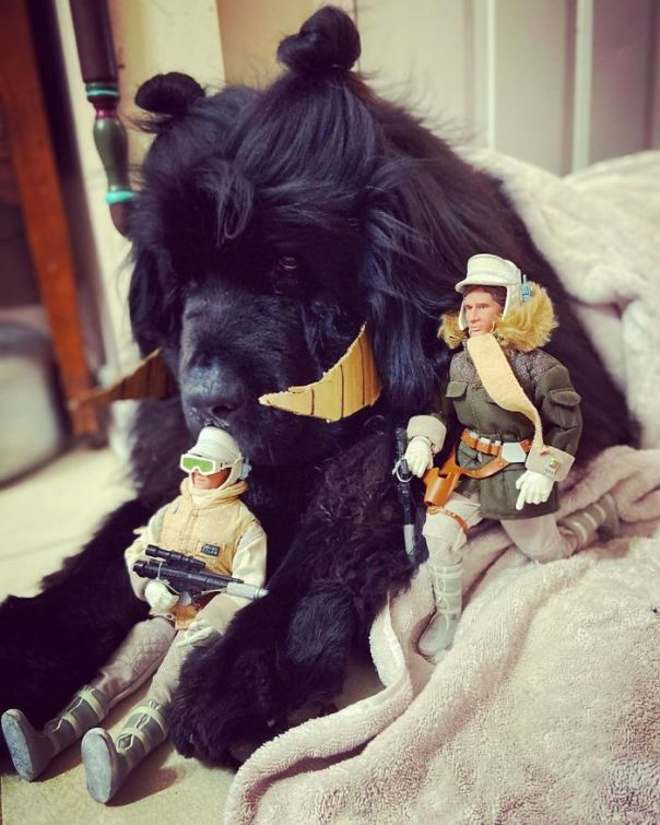 Day 15. (Luke, Han, And The Rare Black Tauntaun)