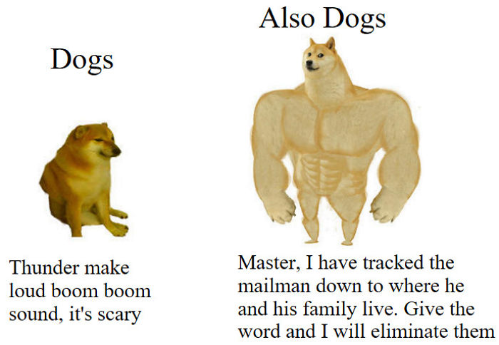 Dog Meme Generator لم يسبق له مثيل الصور Tier3 Xyz