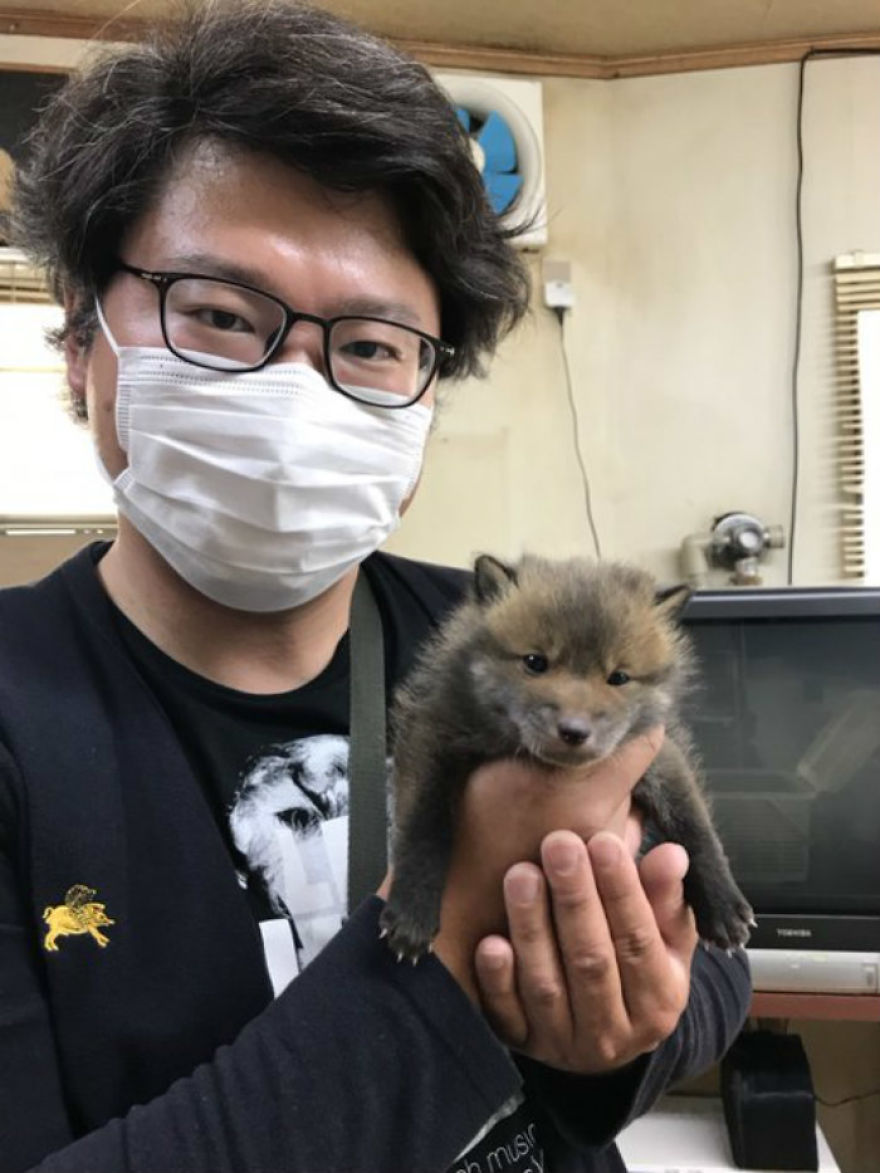 Man Finds A Lost Puppy On The Road And Takes Her Home, Later Learns Through Social Media That It's Not A Puppy, But A Baby Fox