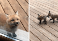 172 Adorable Fox Photos That Prove Theyre Wonderful Animals