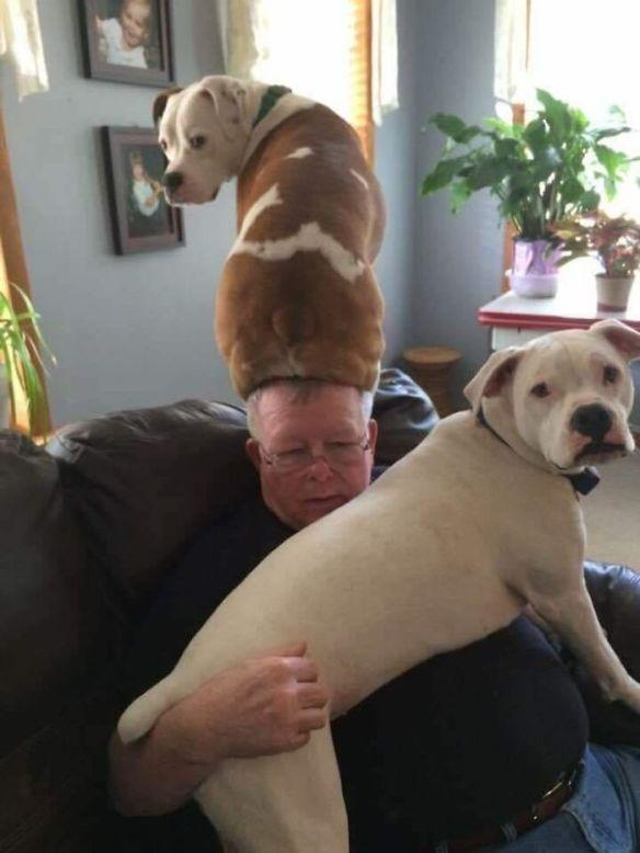 Doggo Hat