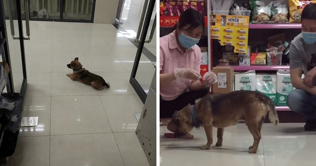 Loyal Dog Patiently Waits At The Hospital For 3 Months After Owner Dies From Coronavirus